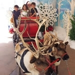 snow-services-events-reindeer